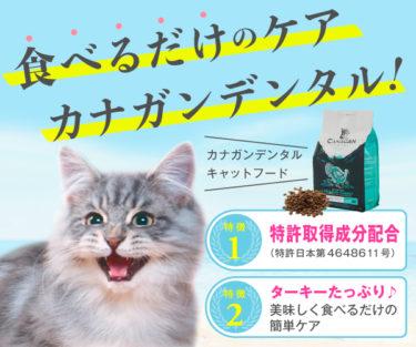 【カナガンデンタルキャットフード】特許取得成分の力は、グーッド!