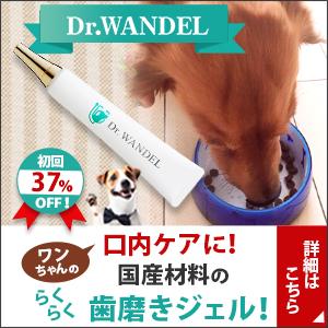 今おさえておくべき愛犬の口腔ケアジェル【ドクターワンデル】